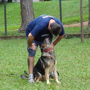 Pastor Alemão Preto Adestrado Dog Master