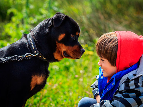 Rottweiler amigo da criança