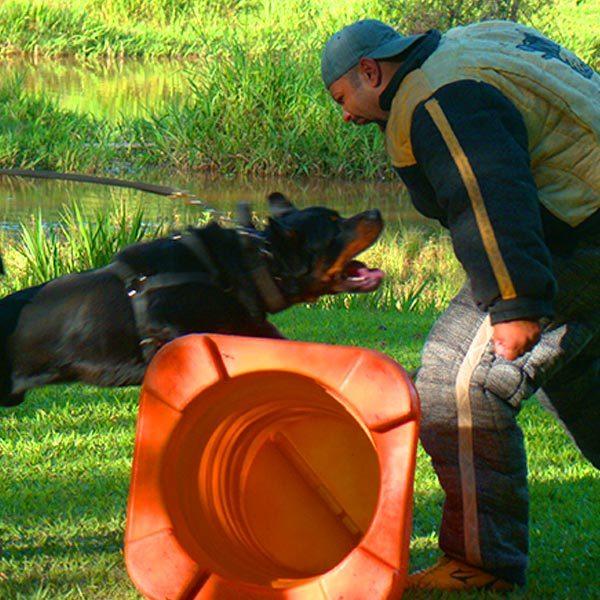 Rottweiler adestrado proteção e guarda