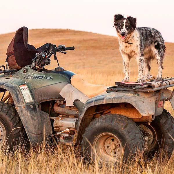 Preciso transportar meu cachorro com taxi dog
