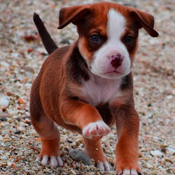 Filhote de cachorro sociavel