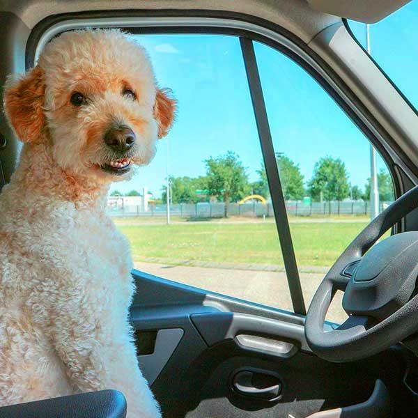 taxi Pet em Campinas