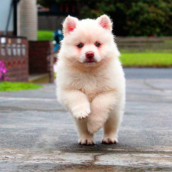 qual o melhor cachorro para guarda
