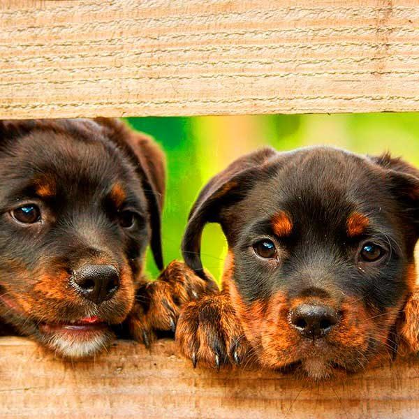 Filhotes de cachorros comportados