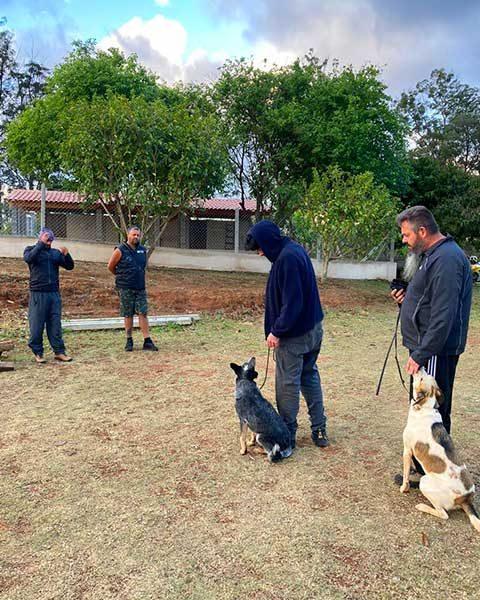 Grupo de adestramento de caes