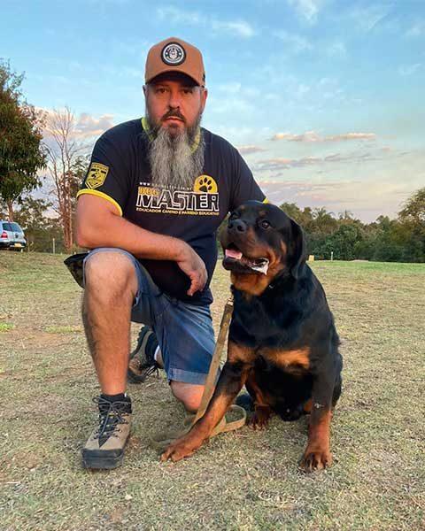 Rottweiler adestrado para obediencia