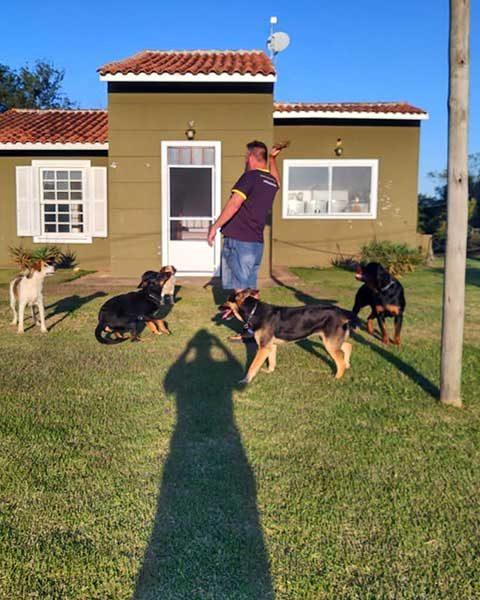 socializacao de rottweiler e pastor alemao